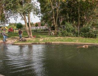 Eerste hondenzwemvijver in Sint-Truiden geopend